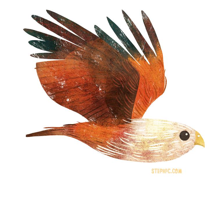 brahimny kite.jpg