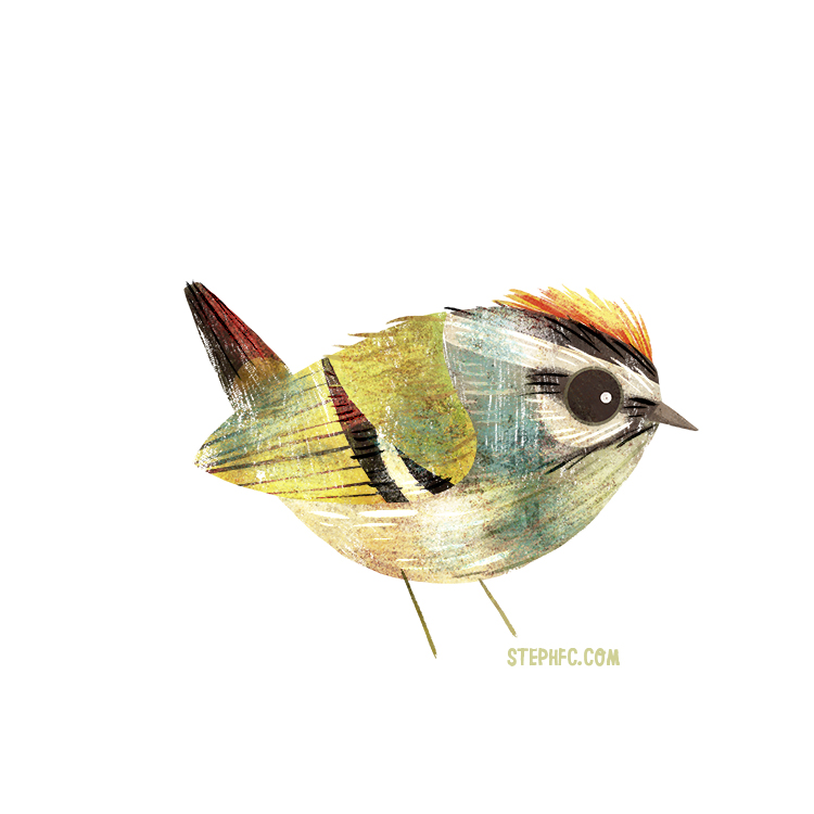 common firecrest.jpg