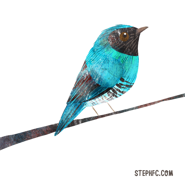 swallow tanager.jpg