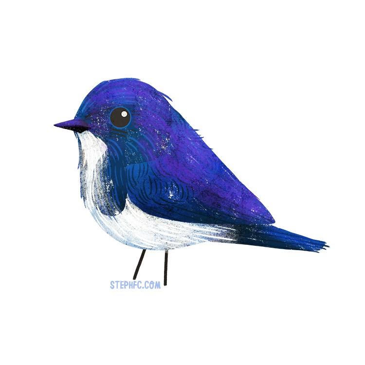 ultramarine flycatcher.jpg