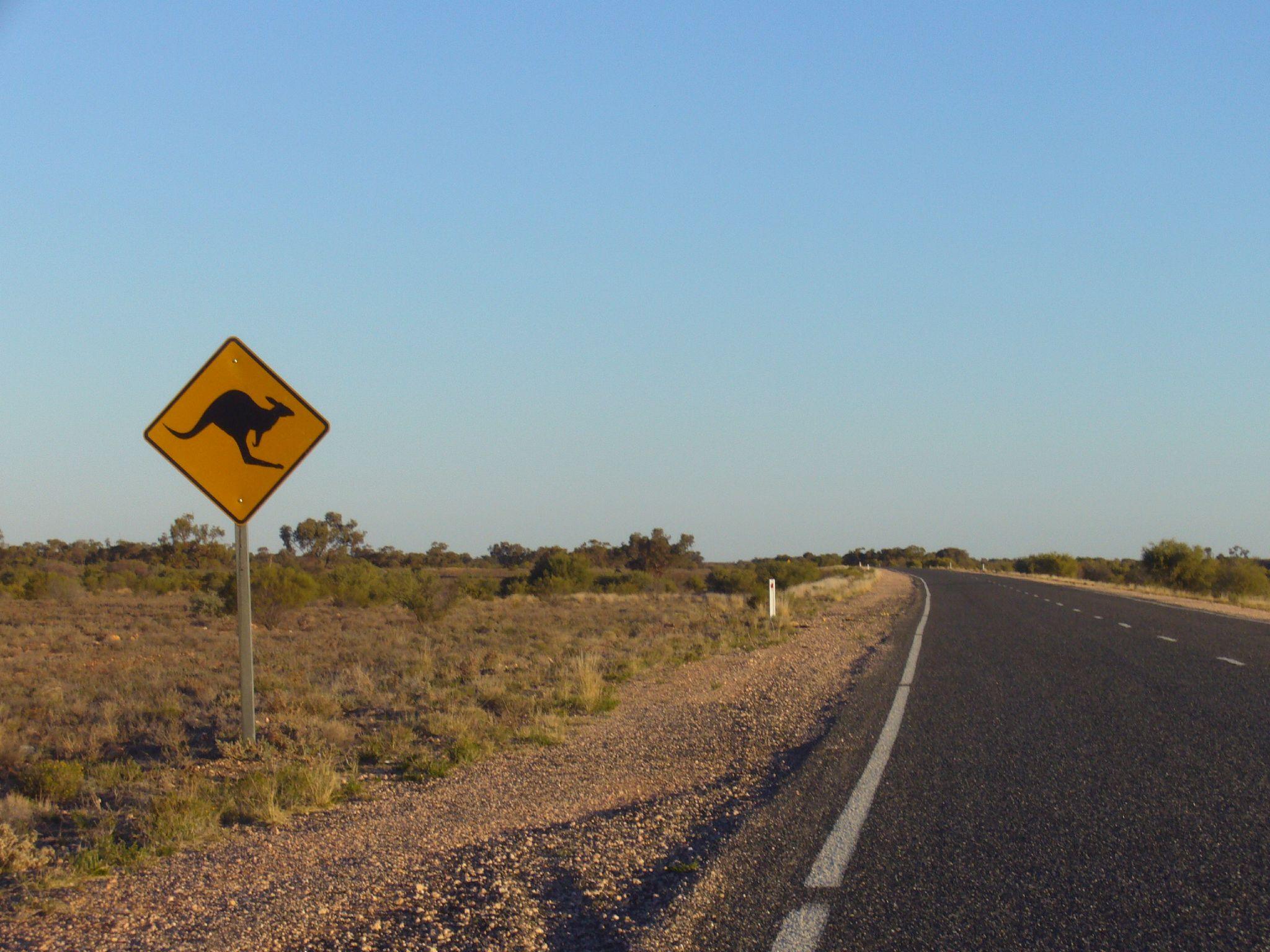 Watch for Kangaroos.jpg