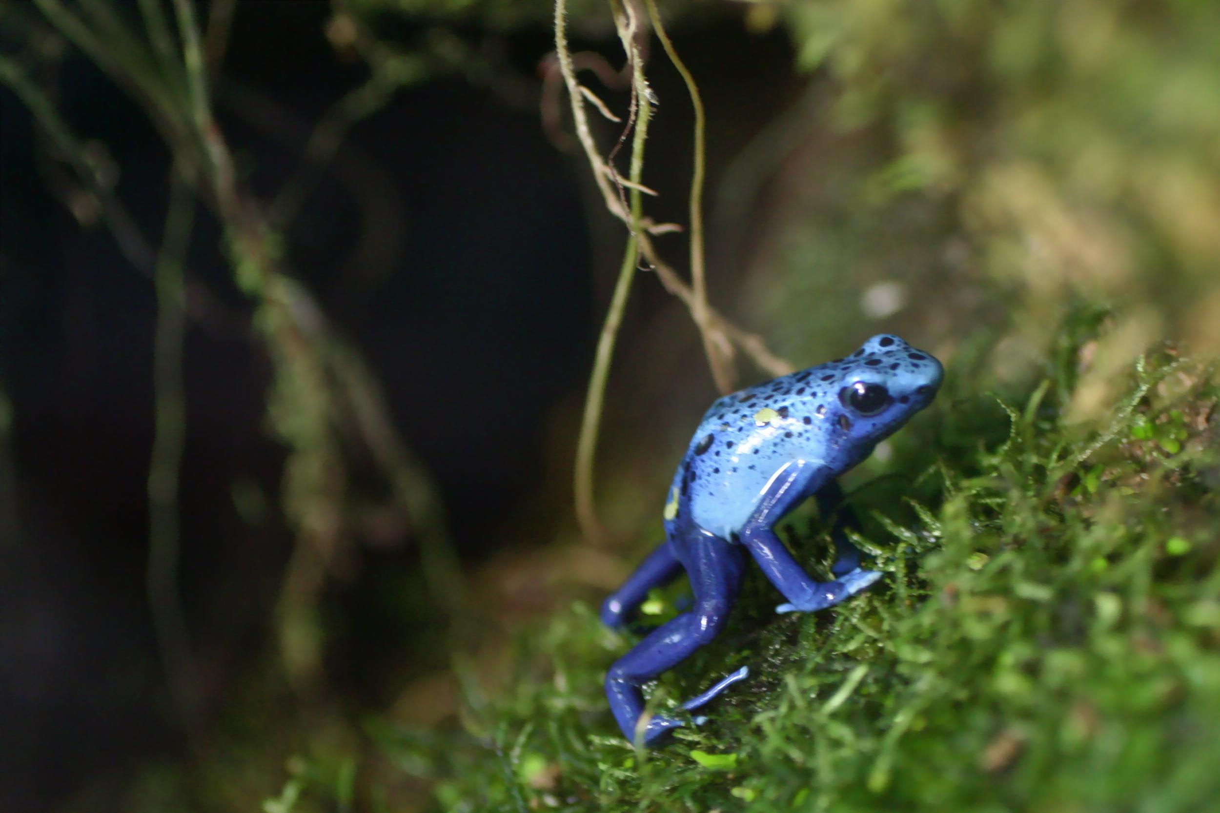 Purple Frog.jpg