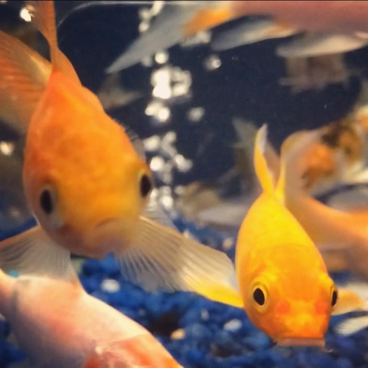 fishie, fishie