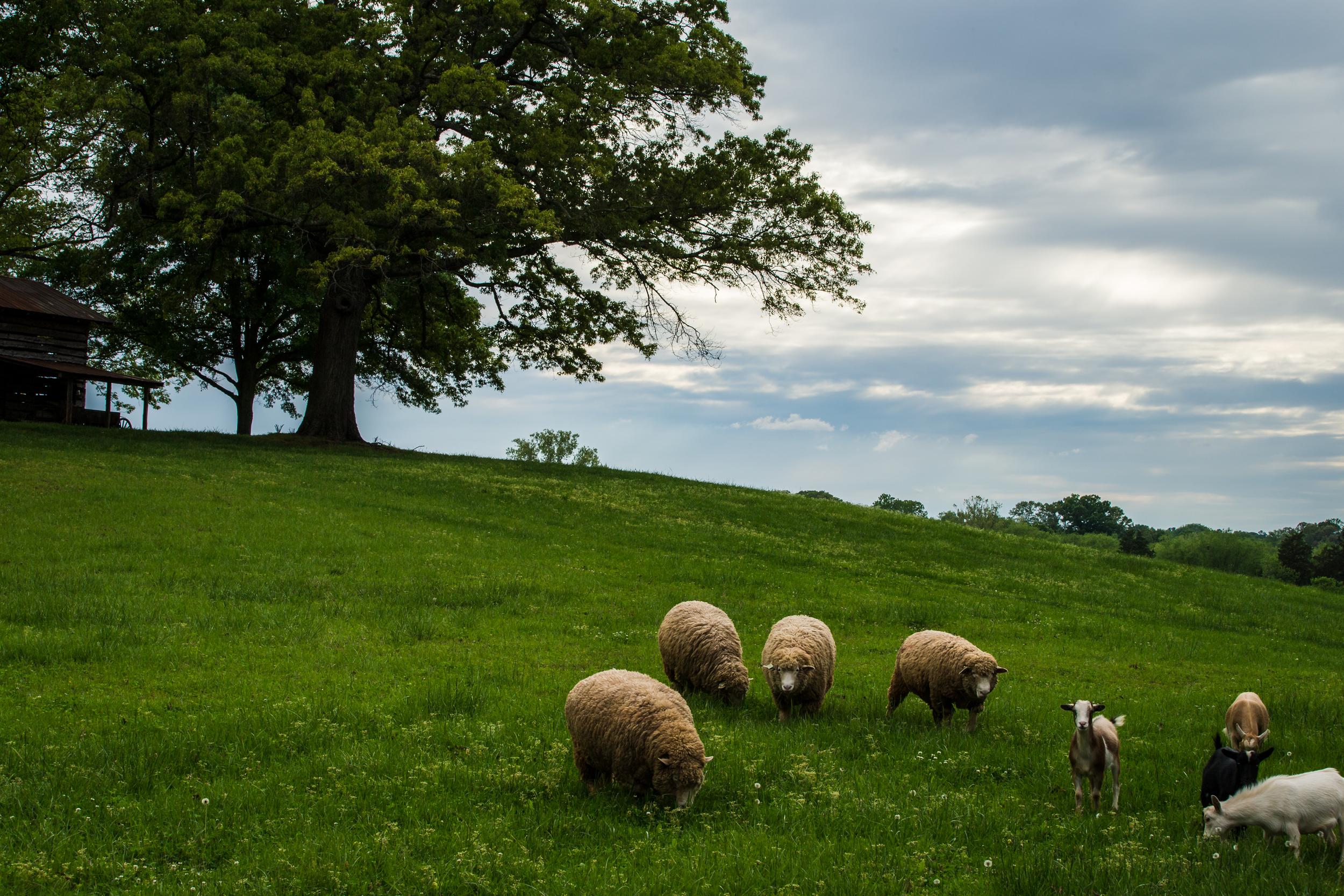 ©jennifer bailey 2015 north carolina countryside