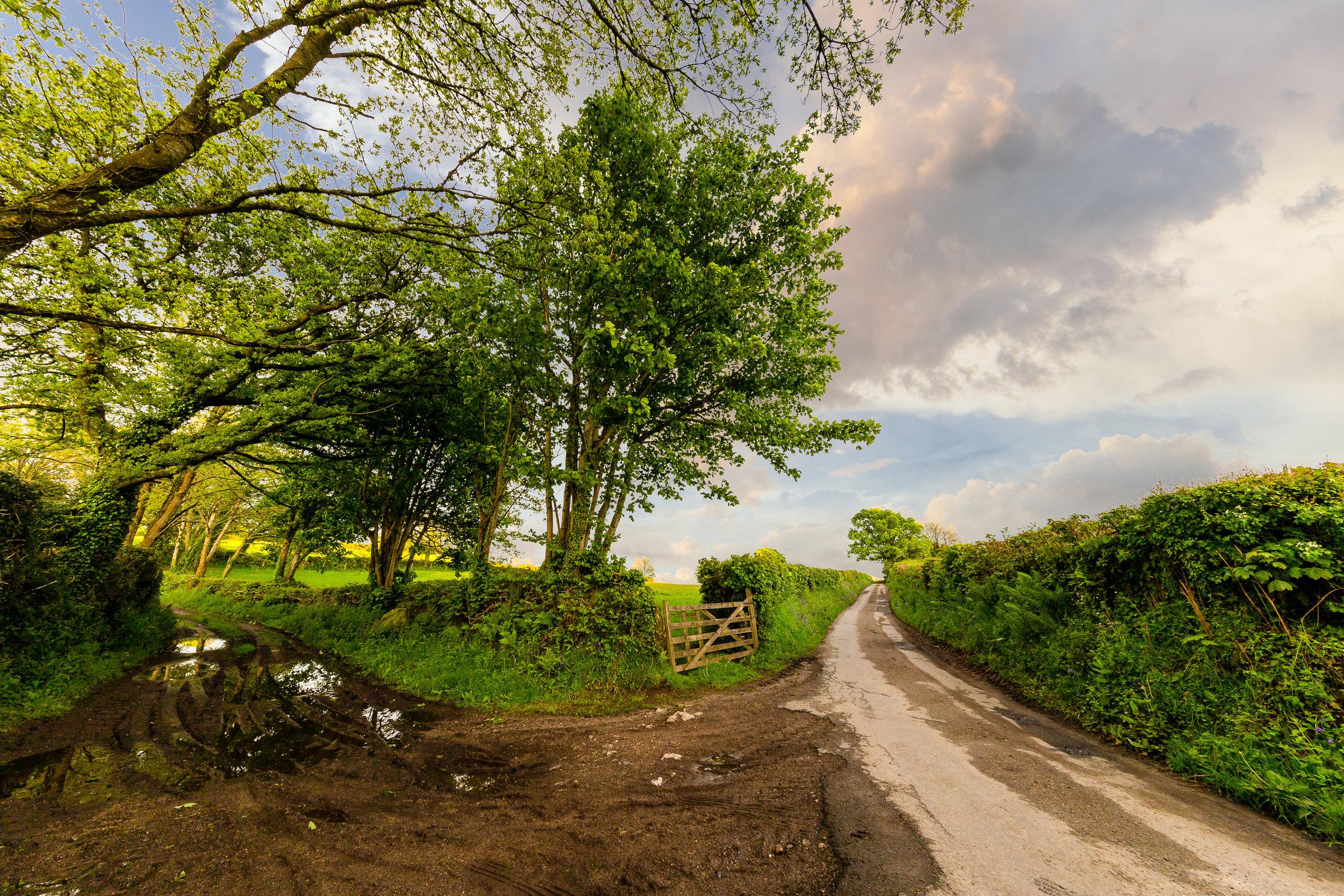 devon countryside dirt road