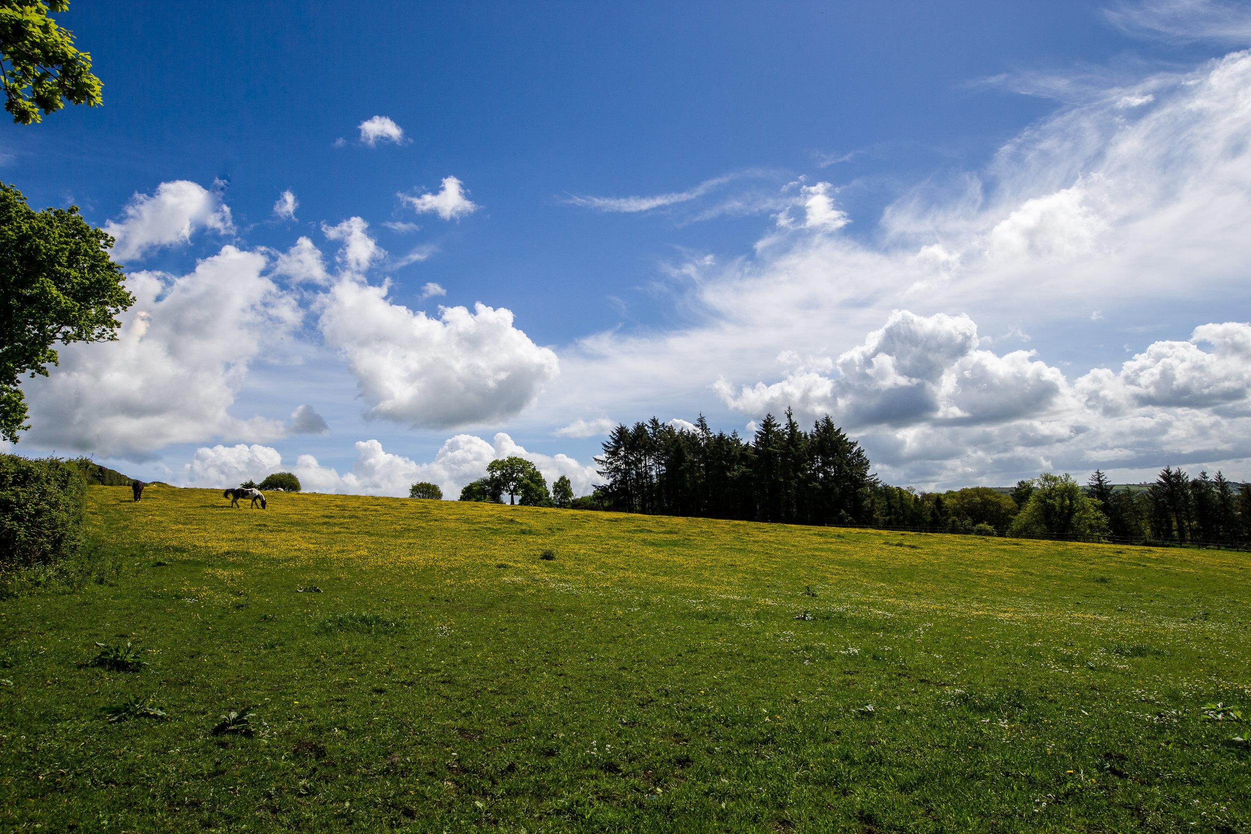field near spinster's rock devon countryside