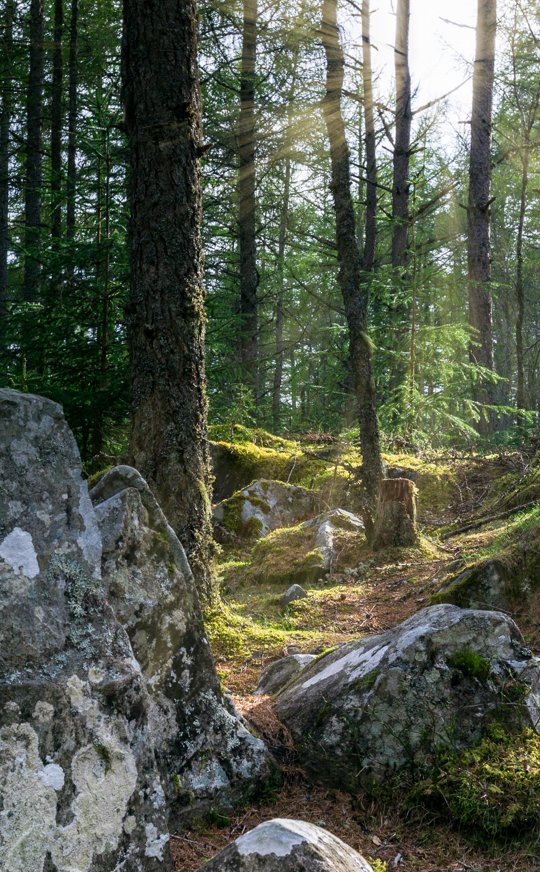 scotland woodland cairngorms 2015 © jennifer bailey