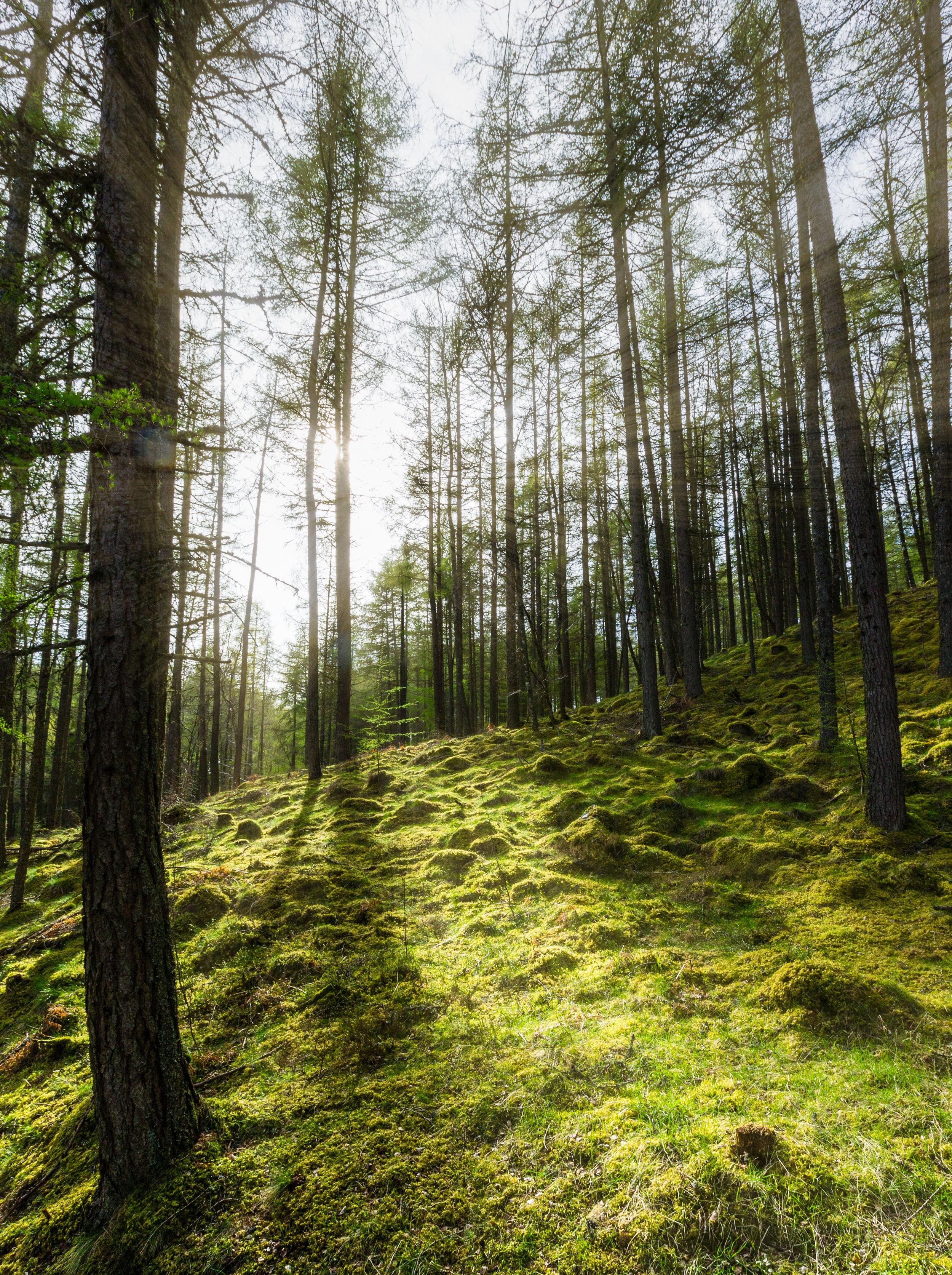 scotland woodland 2015 © jennifer bailey