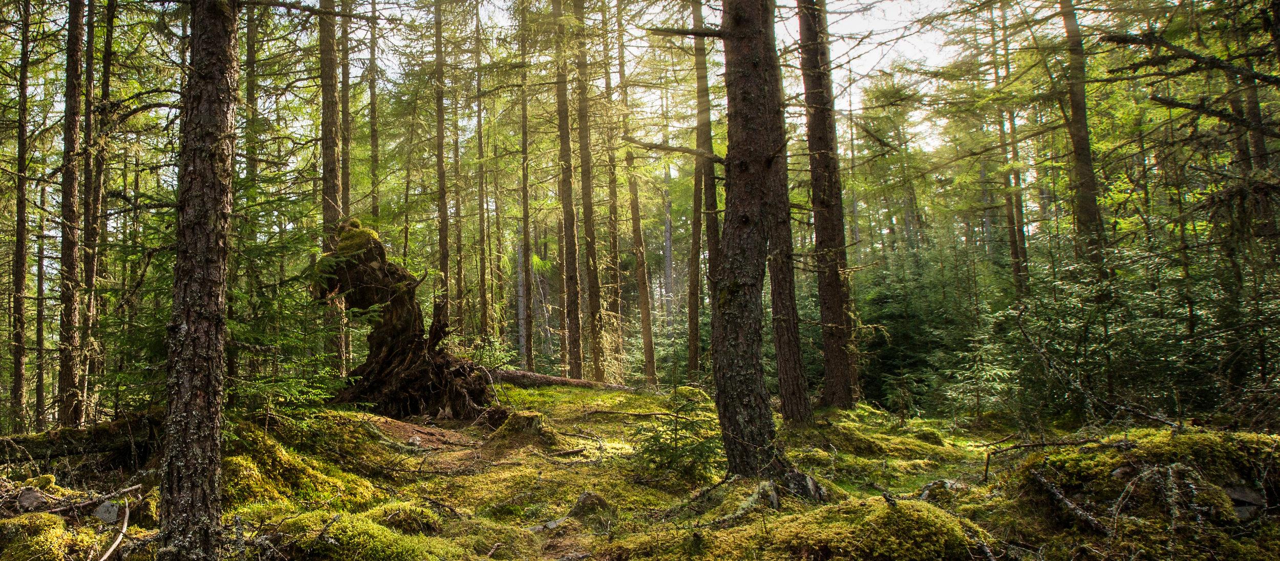 scotland woodland cairngorms national park 2015 © jennifer bailey