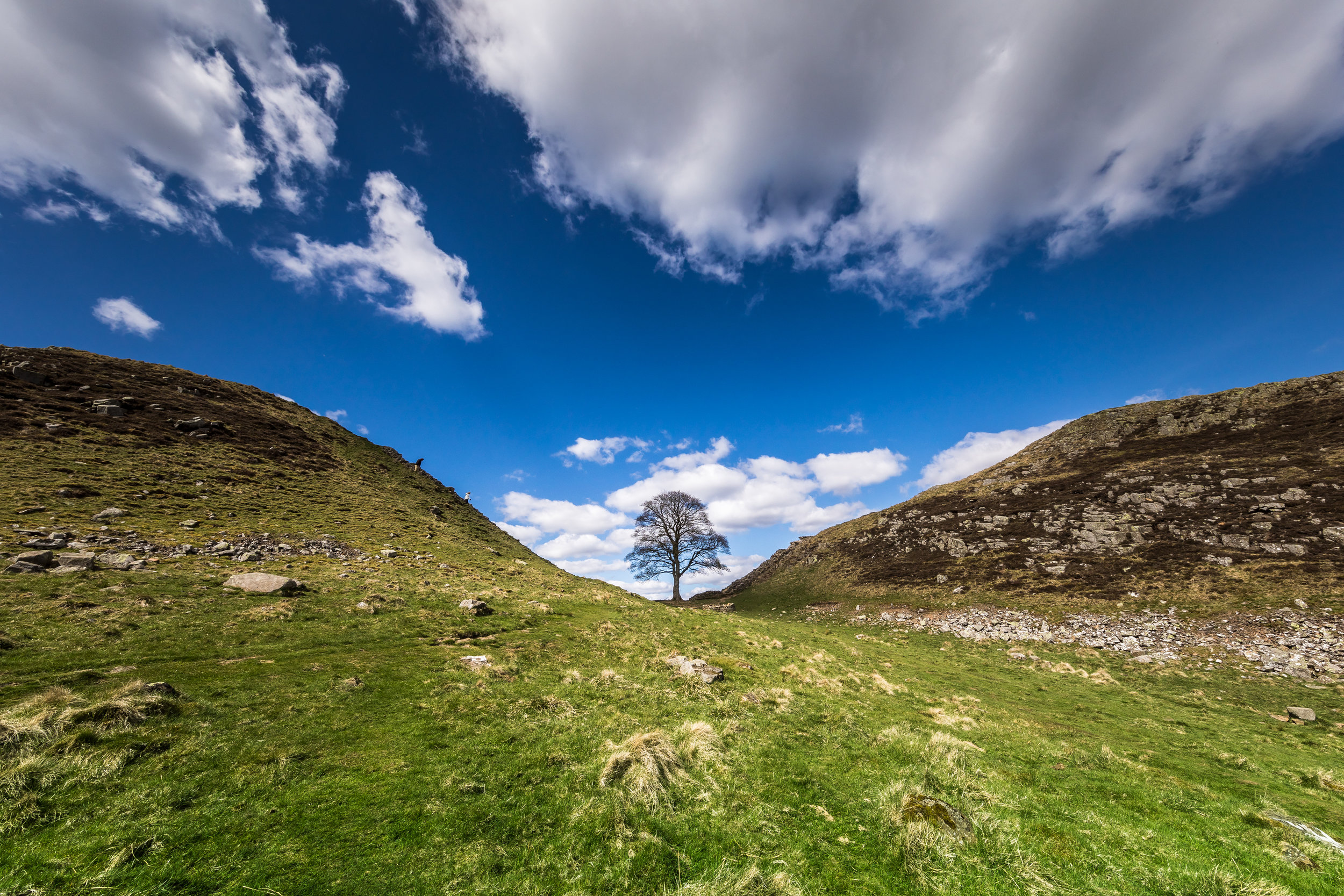 sycamore gap ©jennifer bailey 2018