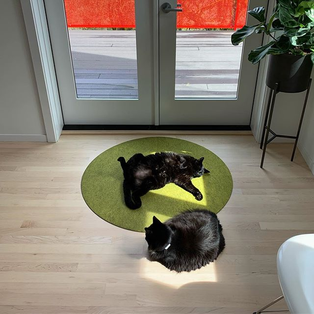 Portland Caturday. Gotta get that sun while it's out! 😽☀️😻 . . . . .  #catstagram #cats_of_instagram #kitten #catlove #instacat #cutecat #meow #katze #catlover #animalsofinstagram #catoftheday #cat_features #ilovemycat #catwalk #catlovers #kittylove #catsagram #lovecats #MyGreatCat #caturday #cats_of_world  #sunsoutbunsout #portland #pdxnow #pdx #travelportland #portlandnw #downtownpdx