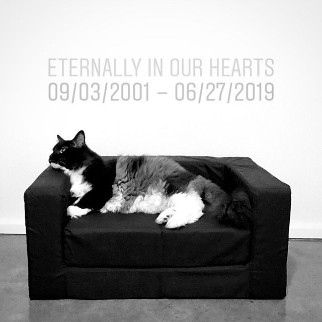 I usually don't post very personal things online, but apparently a letter to a loved one that has passed can be therapeutic. 😢 - Bigfoot, - I'm going to miss you much more than I think I could ever describe. You were our fur-child and we loved you immensely as such. - Thank you for sharing almost 18 very long years with your dad Jon & I. We know a few of those years were tough for you due to your declining health, but we will be forever grateful for your unwavering spirit to live, right up to the end. You were suffering too much in the last few days, I hope you can forgive us for letting you go. It was absolutely one of the most difficult decisions we've ever had to make, but I hope you can rest now. - Thank you for showing me how to appreciate a window view. It's easy to get trapped with our daily tasks, but seeing you by the window gazing out at the trees and birds has made me realize that I need to take a break and appreciate the moment more often. - Thank you for teaching me to have more patience. I'm sorry if I ever lost my temper at you for scratching the couch or any of the many other crazy things you did. Right now I'd give absolutely anything to have you back home with us, scratching the couch to your heart's content. - Thank you for letting me dress you up in silly outfits. I know you enjoyed quite a few of them, but were never really fond of the wigs or headpieces. Nonetheless, you were always game for a fun photo shoot. You've left behind quite a wardrobe, but we will place your most favorite necktie next to your urn. - Your brother misses you tremendously. Please forgive him for being so testy and rough with you over the last couple weeks. He must've been trying to cope with you being sick, and didn't know how to properly express himself. Now that you're gone, he seems to really be missing his other half. You were the peanut butter to his jelly. He's been spending the days laying in your favorite couch spot, I think he knows you would have been happy to