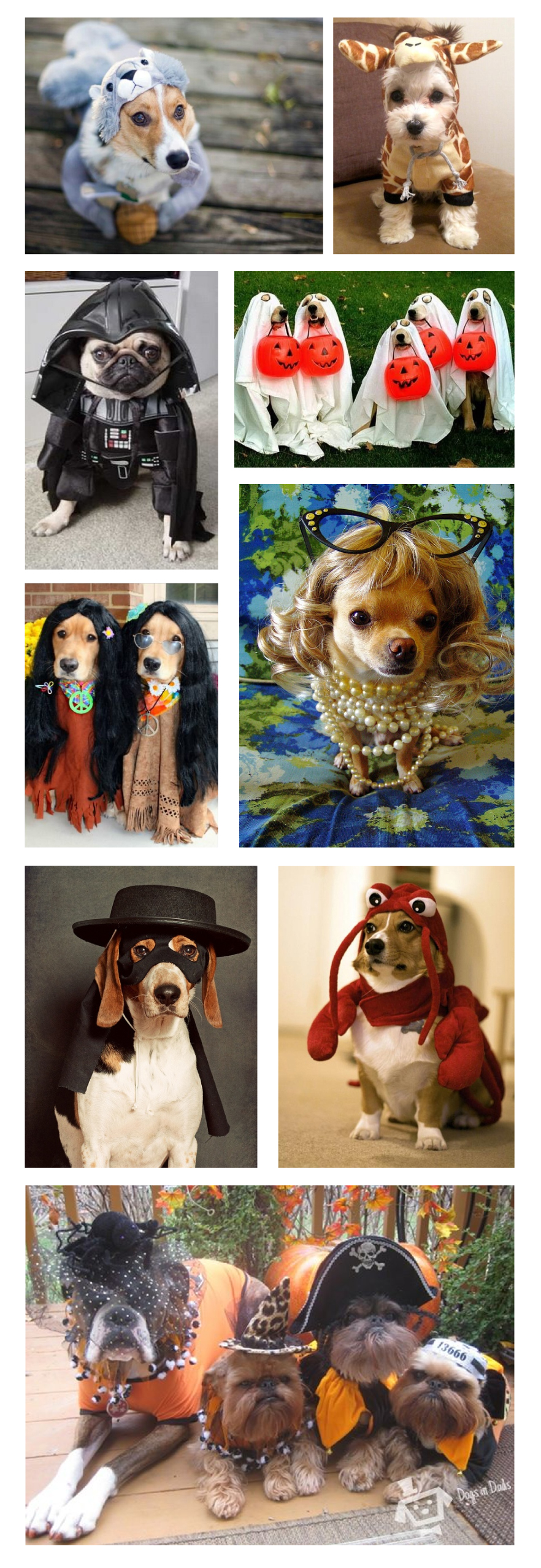 halloweendogs2.jpg