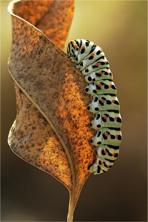 caterpillar_photo.jpg