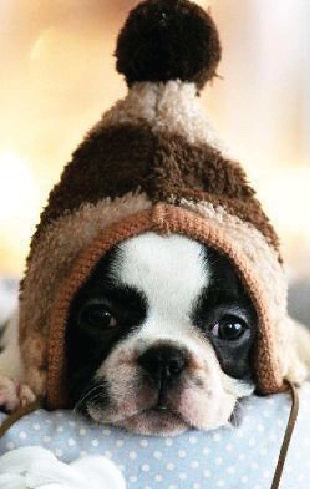 Dog Wearing Warm Hat