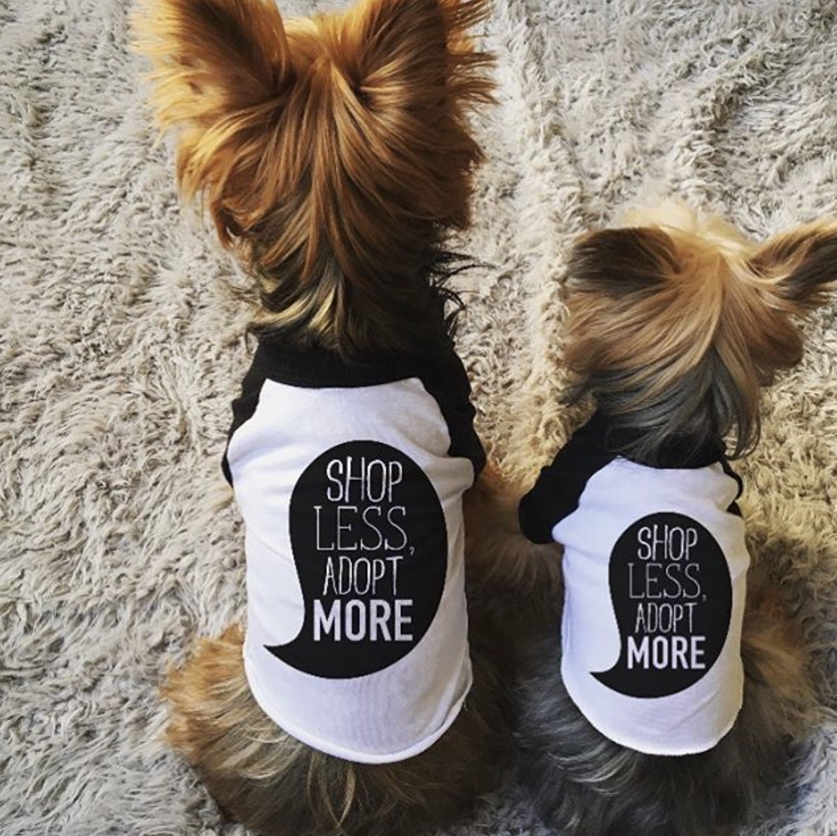 Nutmeg and Lily modeling our new dog shirts.