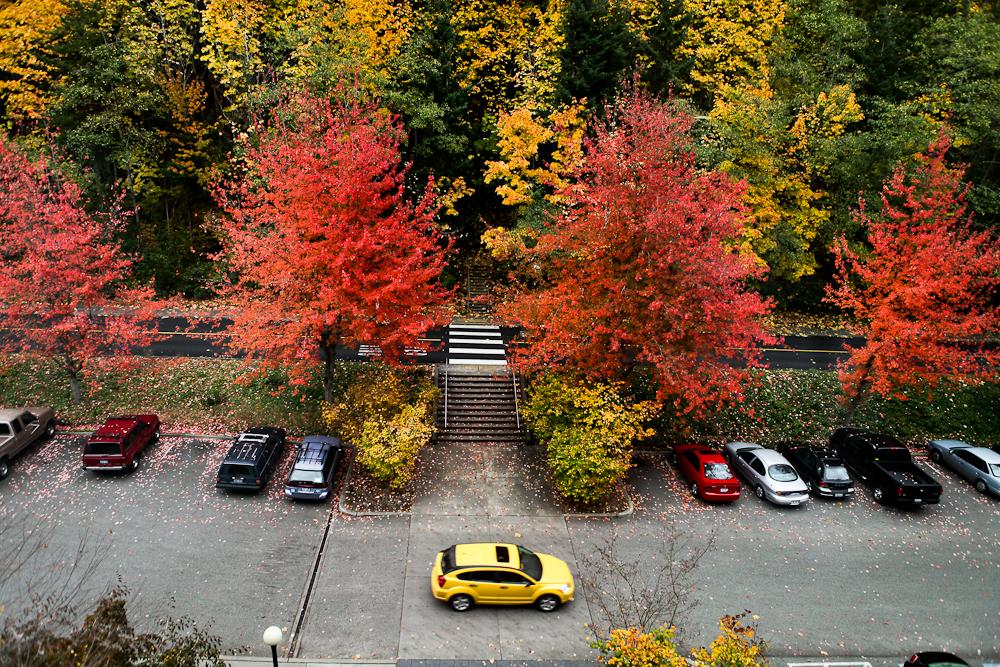 fall-16.jpg