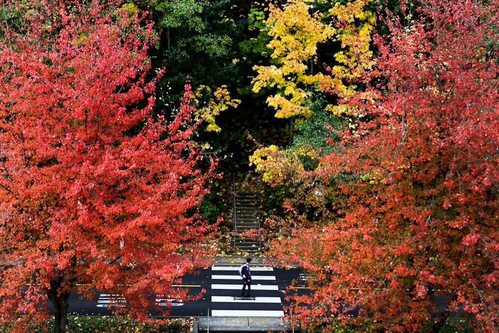 fall-18.jpg