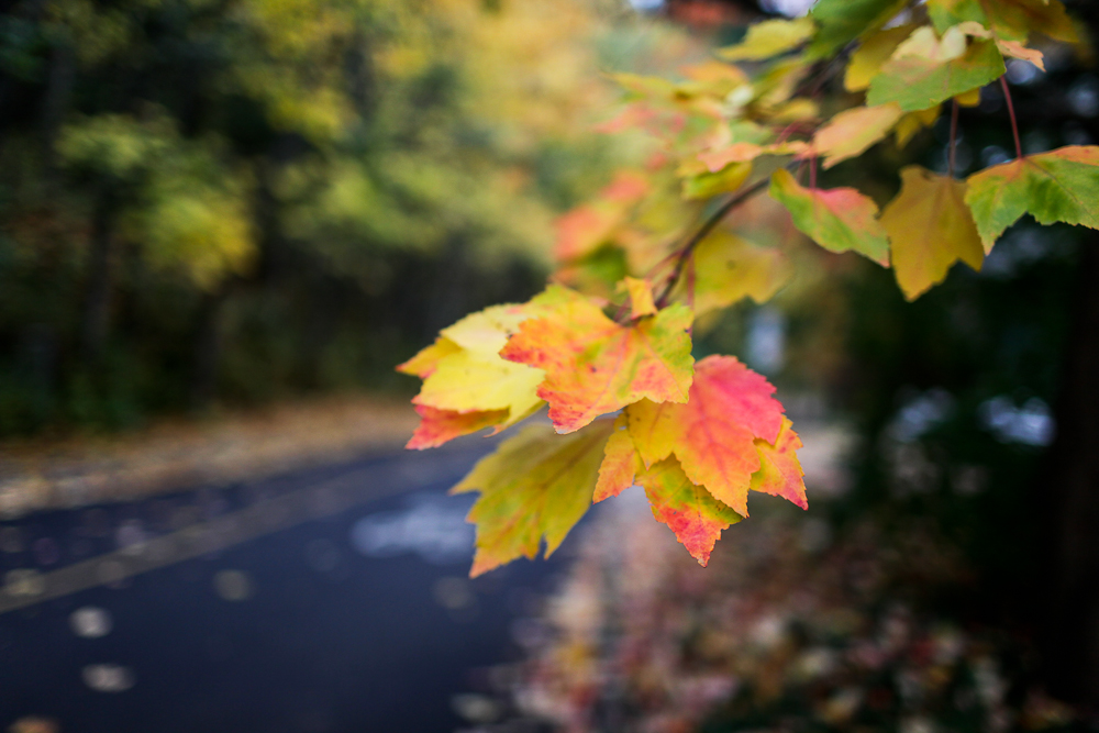 fall-3-2.jpg