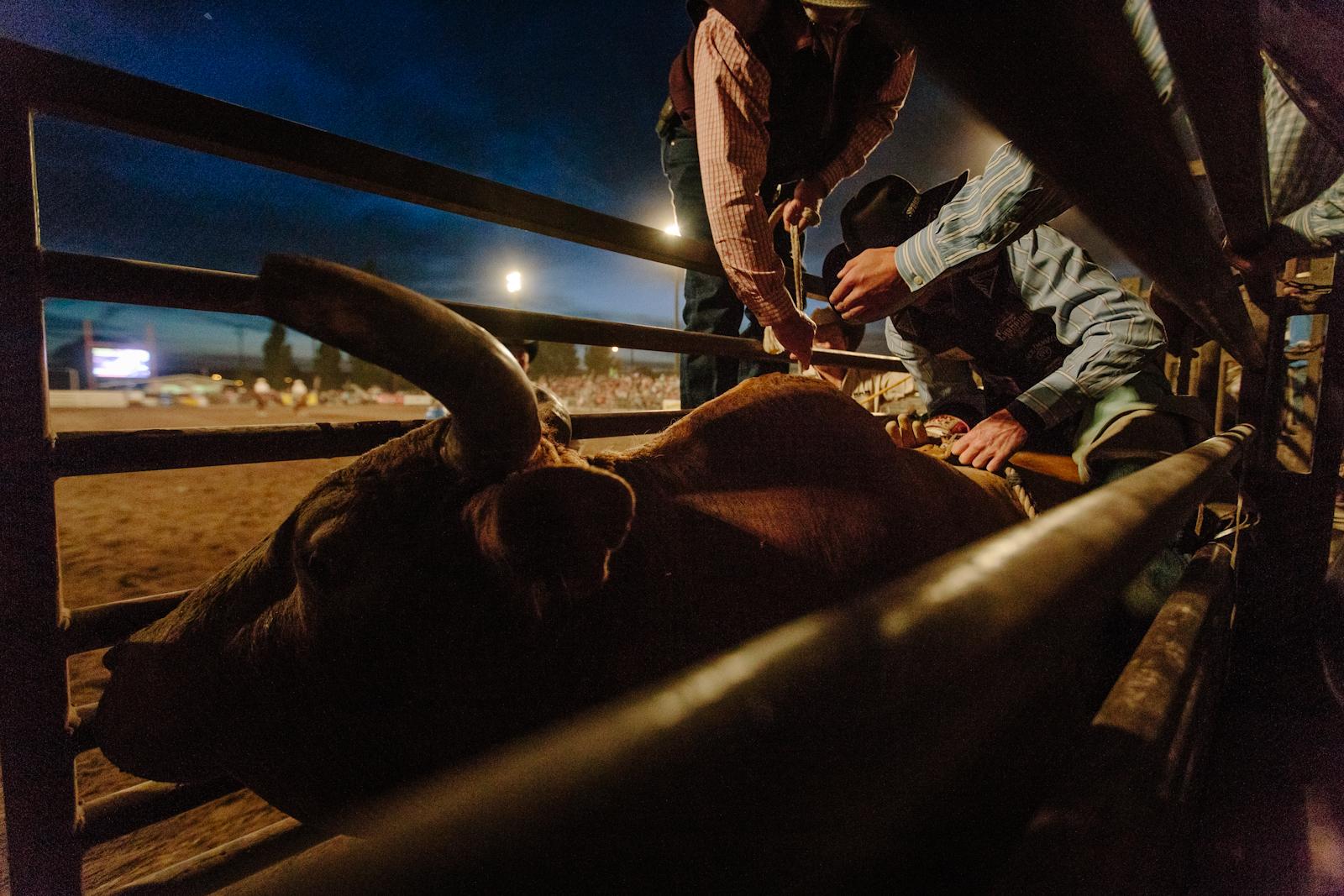 rodeo-75.jpg