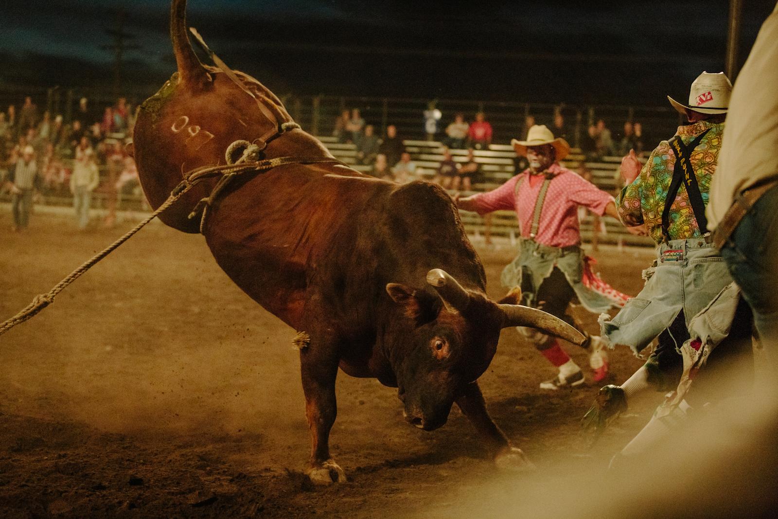 rodeo-85.jpg
