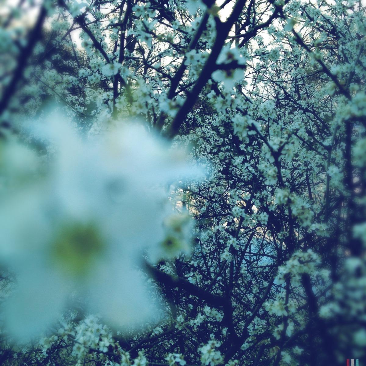2012-04-19 at 19-33-18, nature.jpg