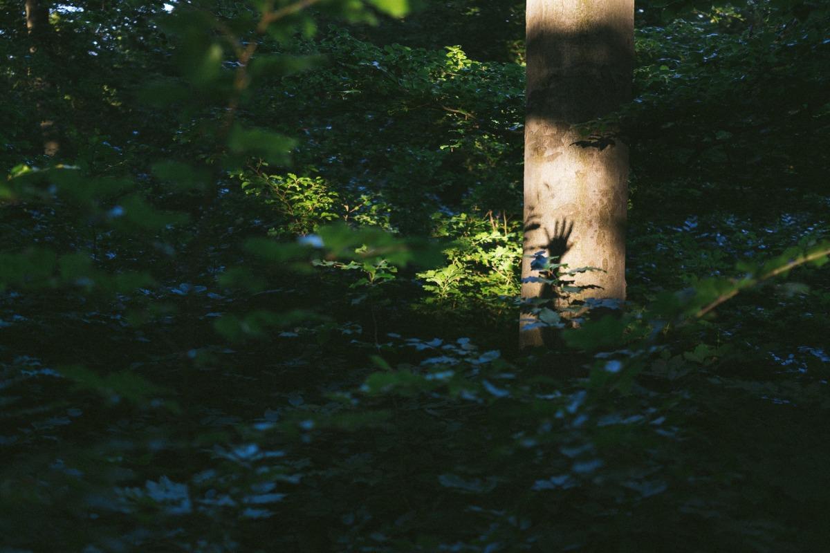2013-06-18 at 06-59-25, nature.jpg