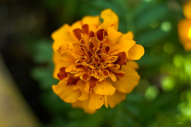 Flowers_071506_034_.jpg
