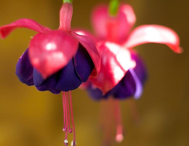 Flowers_071506_037_.jpg