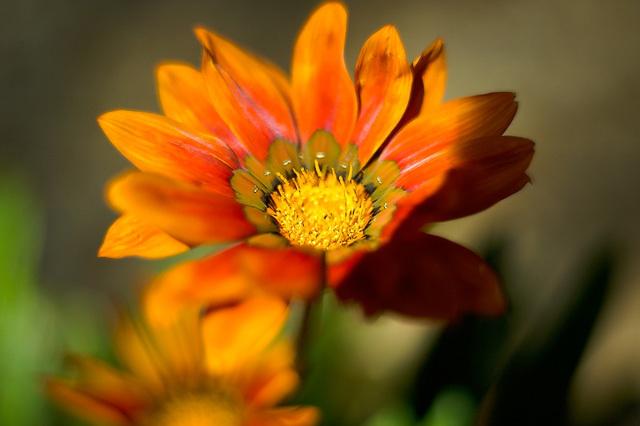 Flowers_071506_067_.jpg