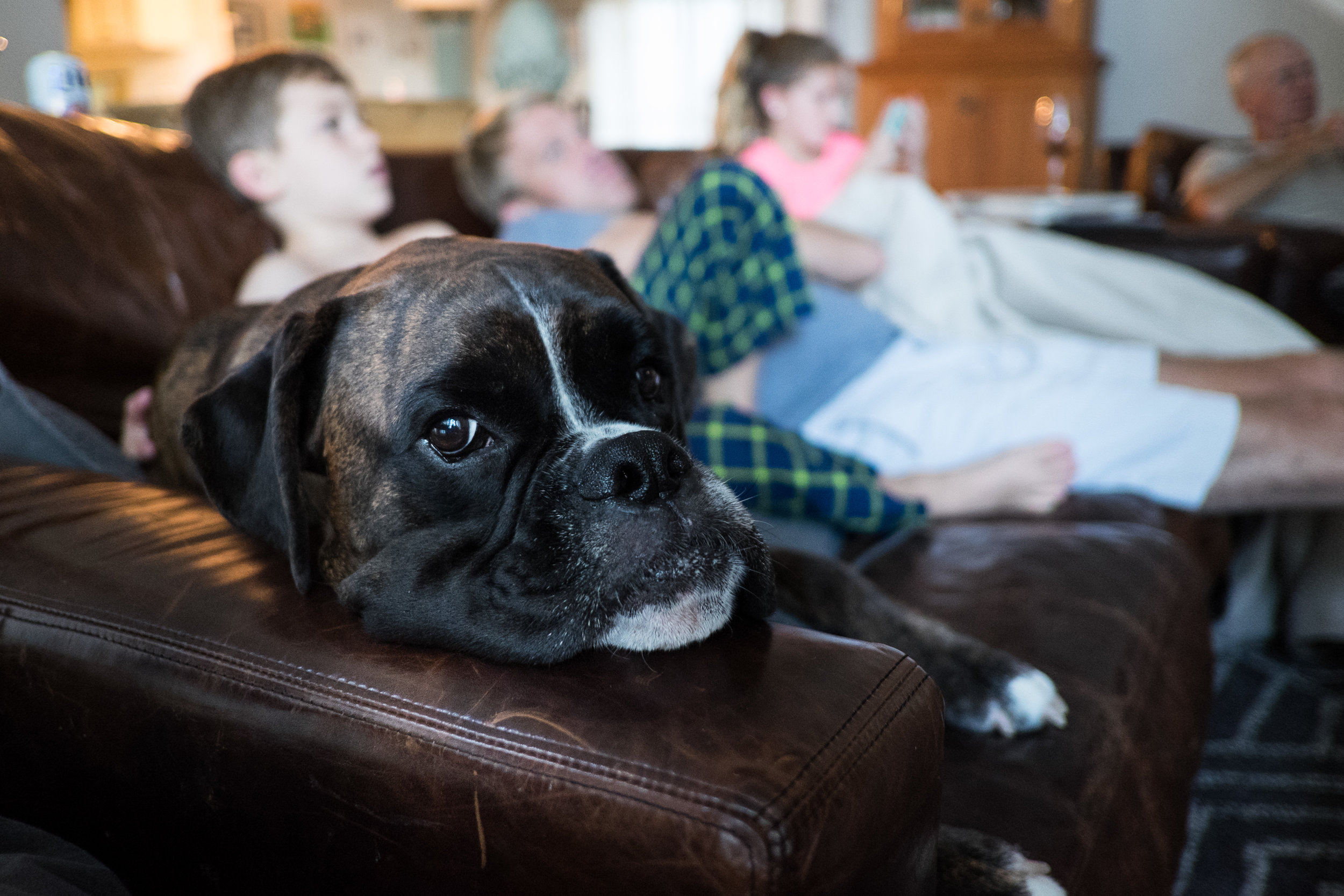 Brisket has officially taken up residence on the couch, even when we're clearly looking.