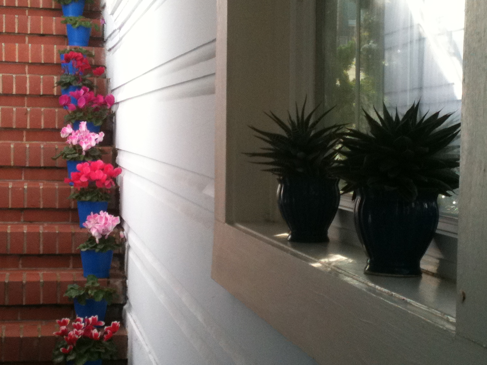 Succulents and Cyclamen blooming on the entry staircase.