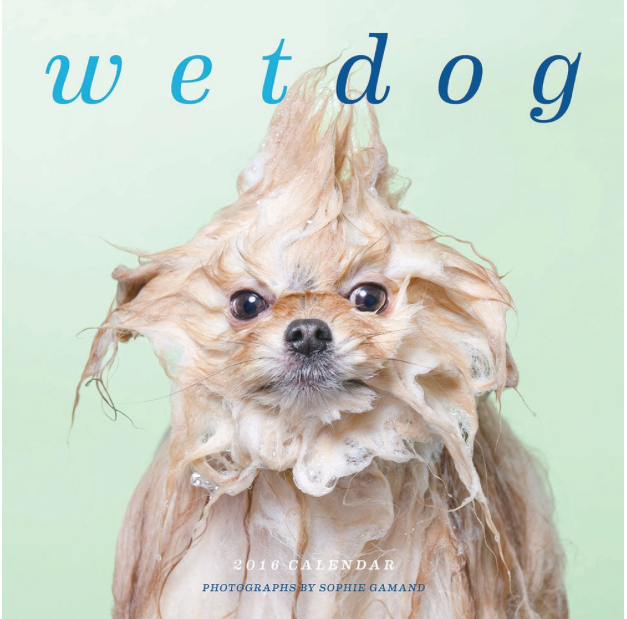 Maybe because this is my first year as a dog owner, I found this  Wet Dog Calendar  absolutely hilarious. My dog, Charlie, isn't quite as unusual when he's wet as these doggies are, but maybe he'll make it in next year!