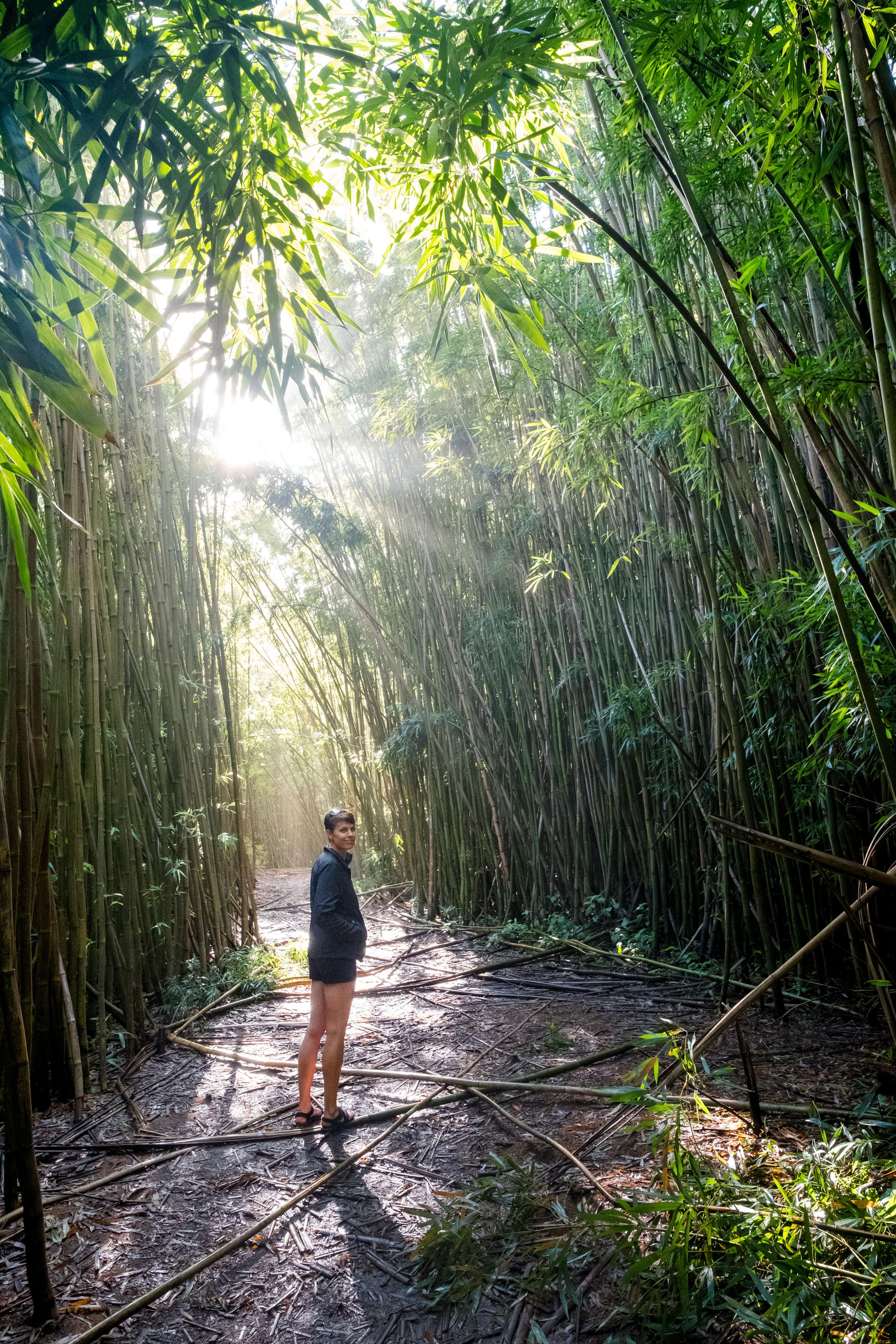 DSCF2570_Bamboo Forest.jpg