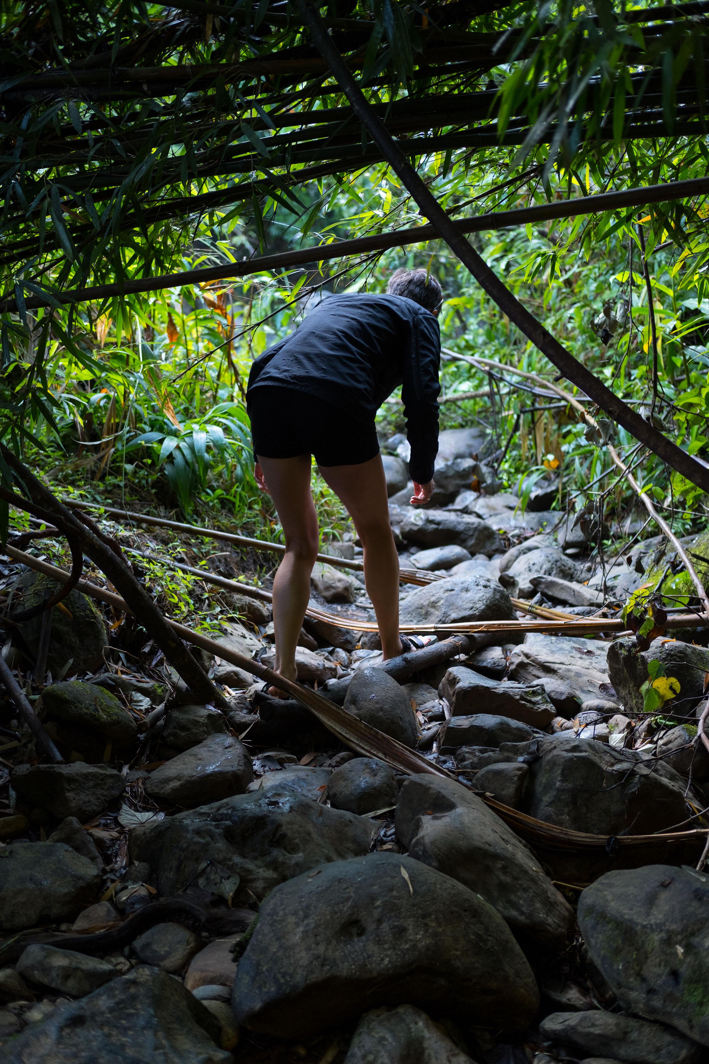 DSCF2592_Bamboo Forest.jpg