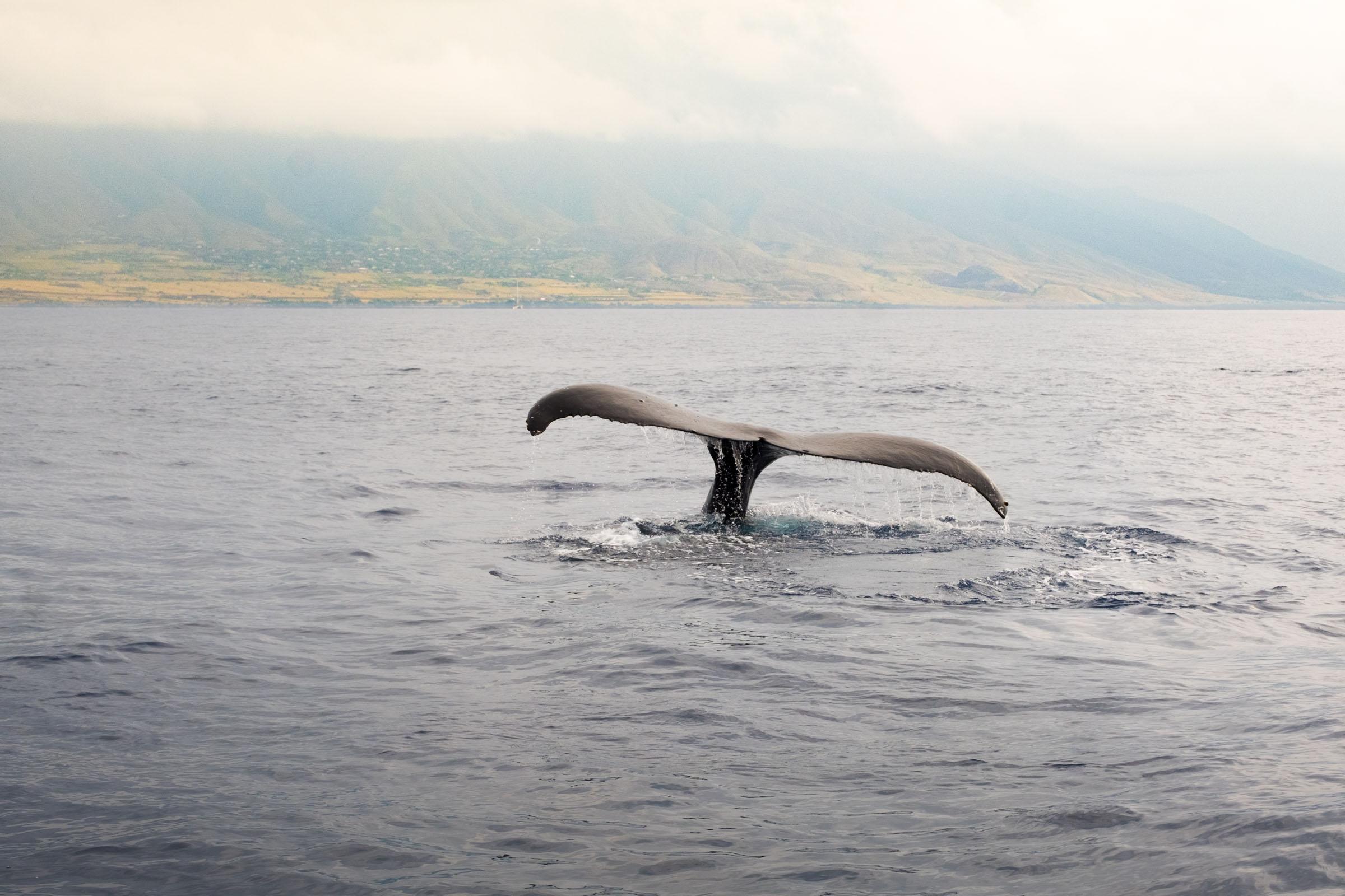 DSCF2448_Whale Watch.jpg