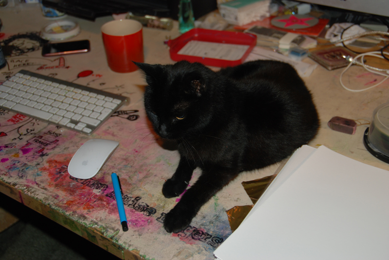 'I will have that die cut and I will shred it' Shrody Cat