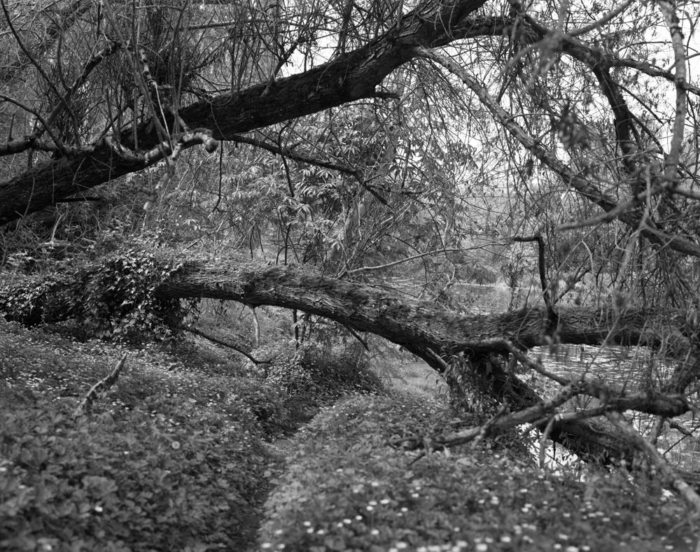 Arboretum Treescape, 2013