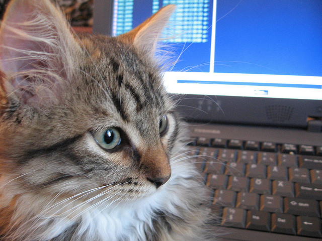 Don't ask your cat what they think about your new product or service. Chances are they won't be really objective.