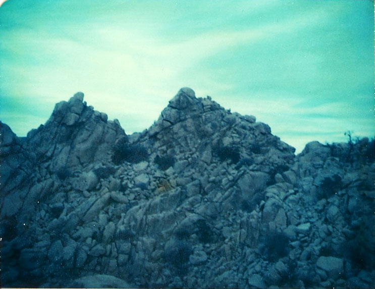 Josuha Tree Polaroid 9