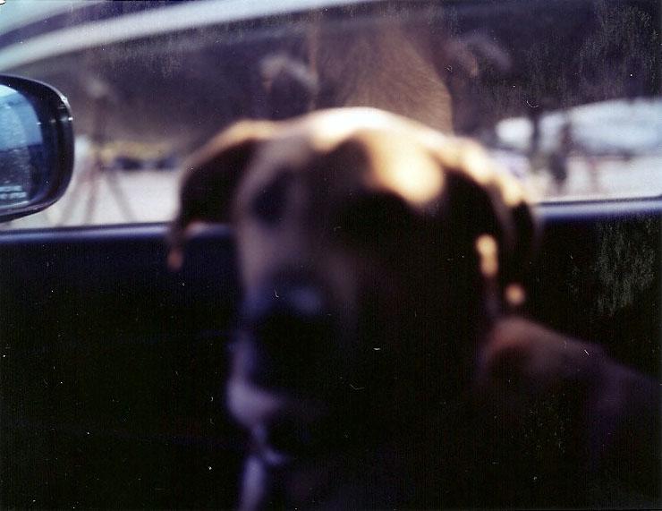 rigby blur.jpg