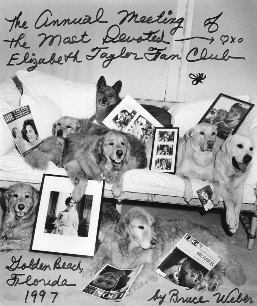 Bruce-Weber-Liz-Taylor-Dogs.jpg
