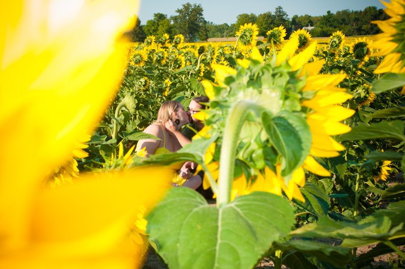 ellow Springs Sunflower Field Photos And Engagement Photos