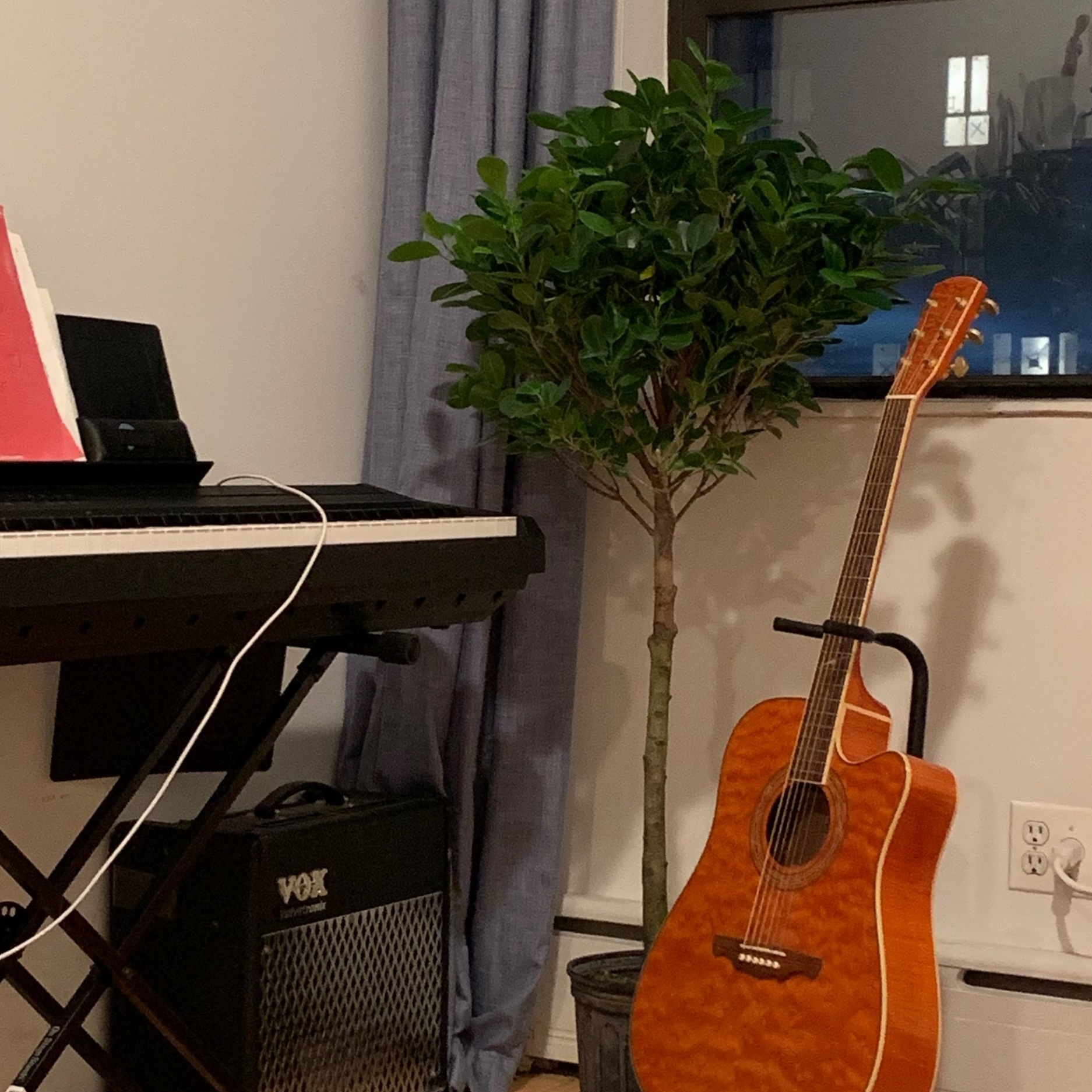 Our tree loves music.