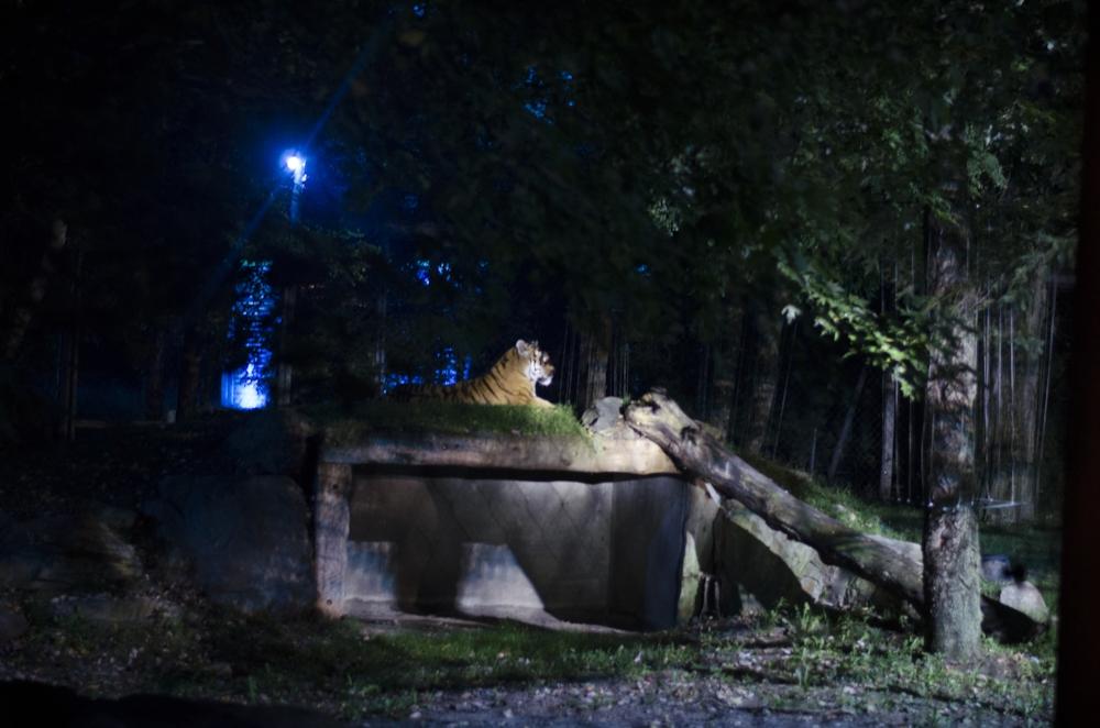 zoo (12 sur 15).jpg