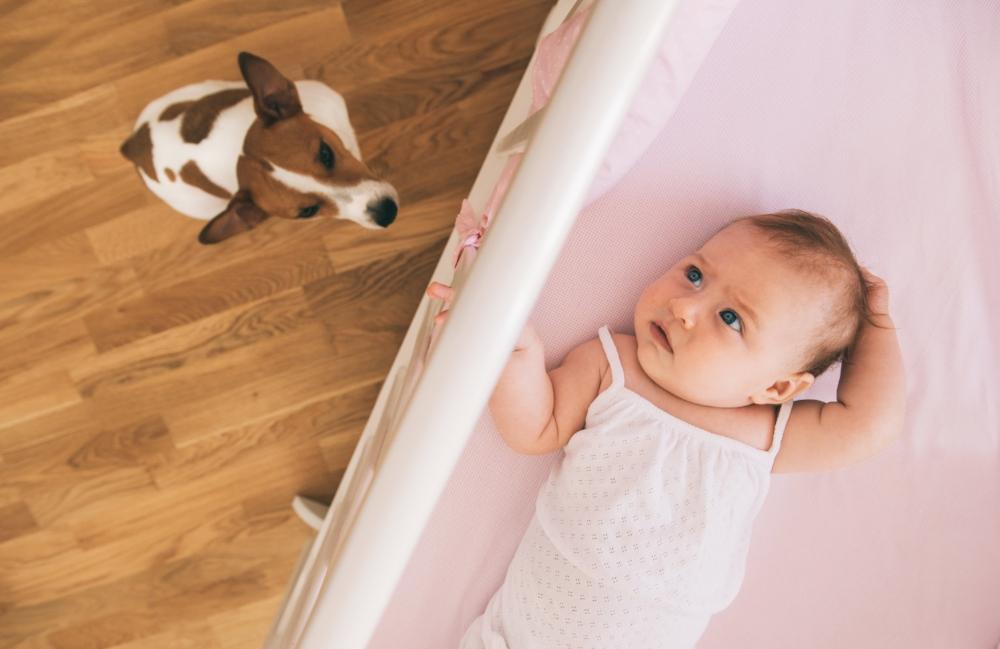 préparer son animal à l'arrivée de bébé