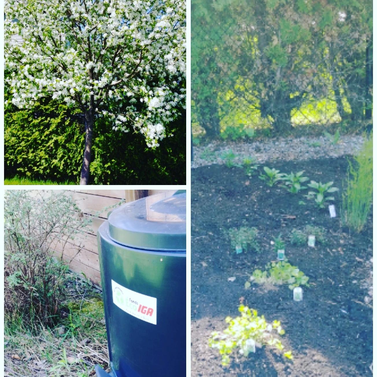 gestes écolo à poser cet été-jardin-compost-réutilisable-maillot lavable-couche de piscine réutilisable-couches lavables-écolo-famille-enfant-potager-écologie-Famille Écolo-Je suis une maman