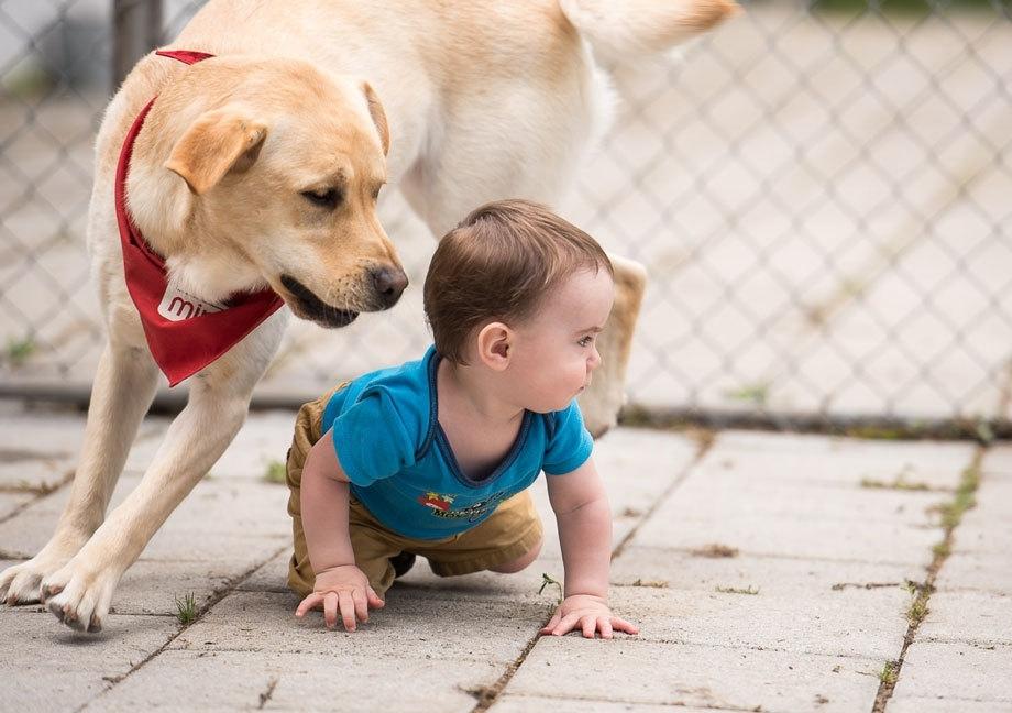 Mira-Mondou-Mondon-Campagne de financement-chien Mira-Chiens d'assistance Mira-Donner-Aider-Financement-enfants-famille-Je suis une maman