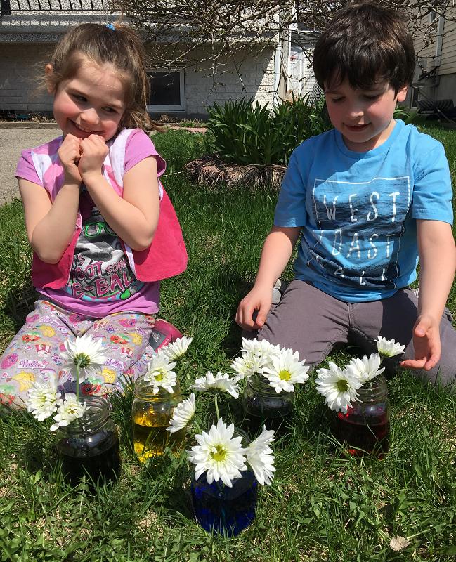 marguerites-fleurs-fleurs+colorées-couleurs-met+de+la+couleur+dans+ta+vie-colorer+des+fleurs-colorant+alimentaire-expérience-plaisir-enfants-simplicité-#mamanbricole-Maman+Bricole-Je+suis+une+maman-7.png