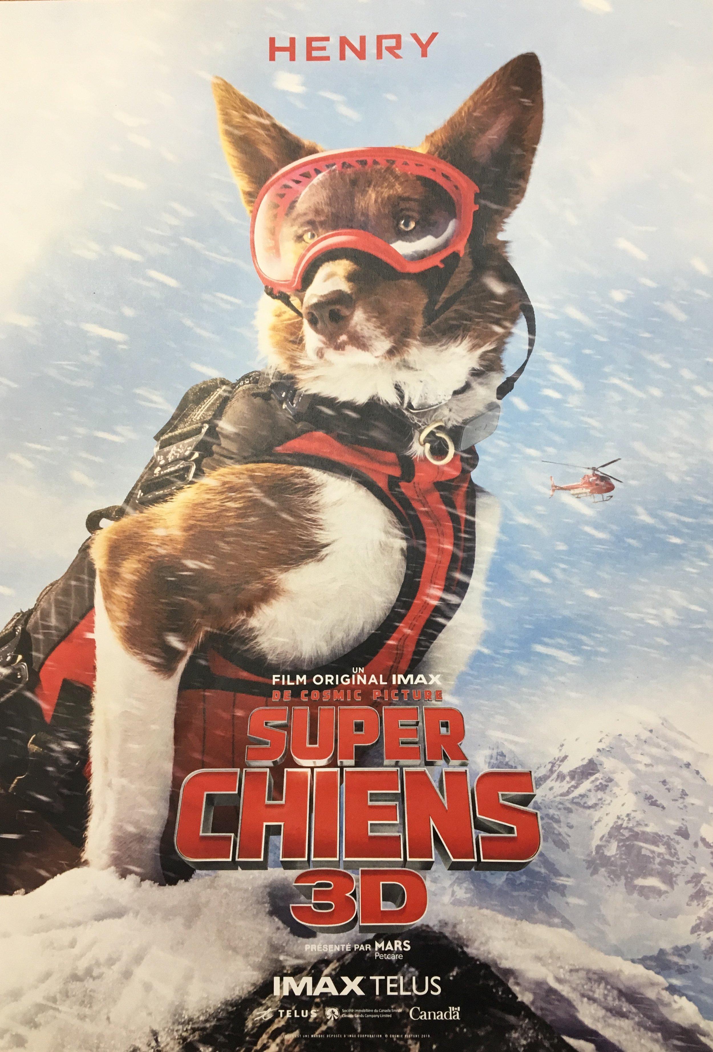 film-3D-super-chiens-expérience-immersive-superhéros-action-sauveteur-activité-chiot-